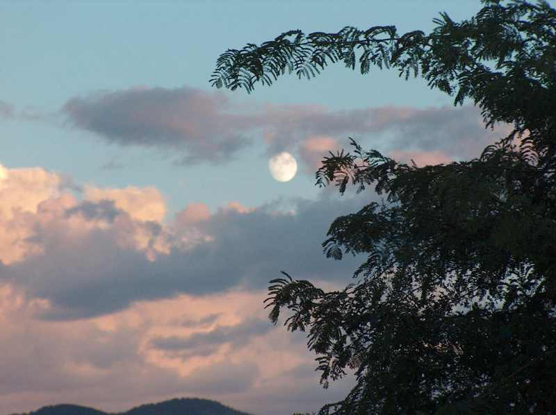Moon_clouds_and_tree