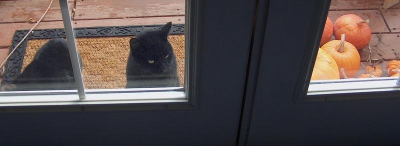 Cats_pumpkins_at_door_2
