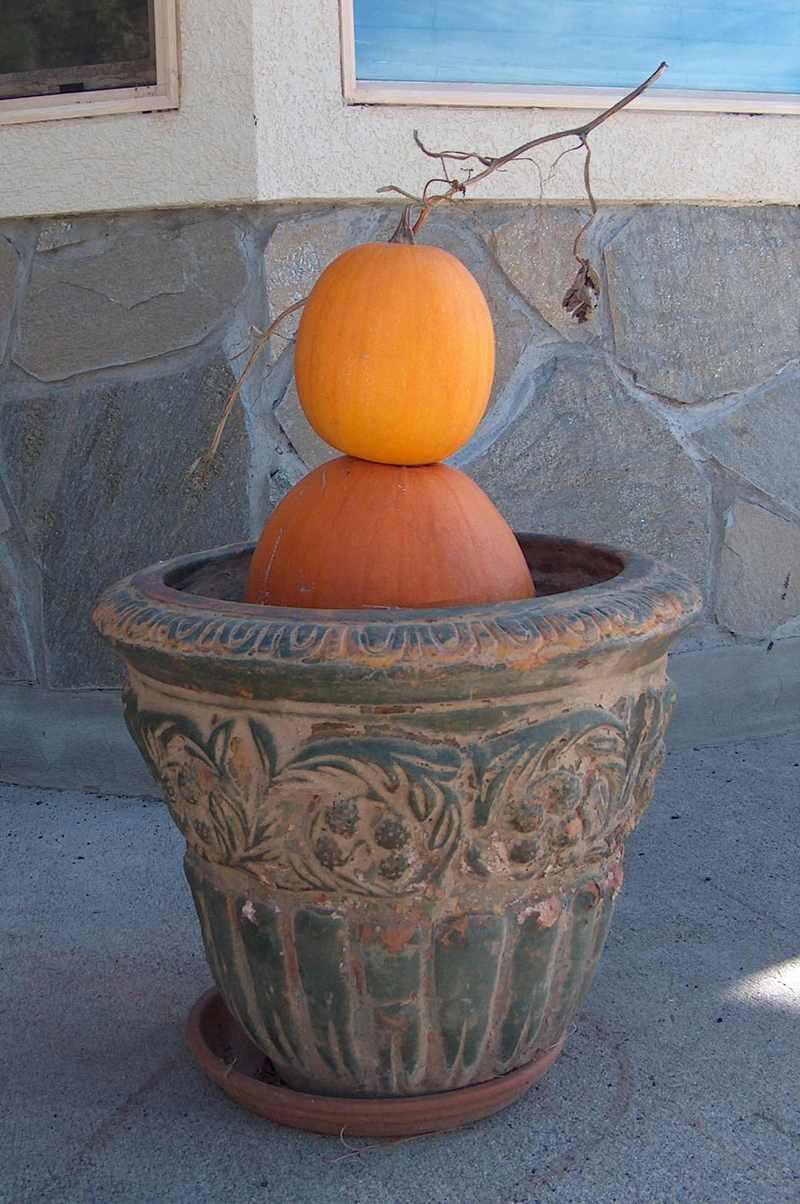 Pumpkin_planter_3